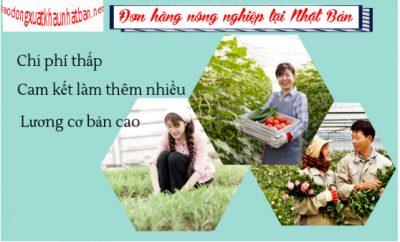 Nông nghiệp Nhật Bản – đơn hàng nông nghiệp trồng dâu tây tại Nhật tuyển 25 nam nữ lao động