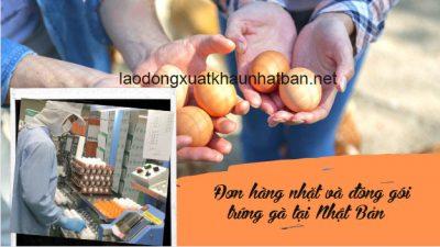 Đơn hàng đóng gói trứng gà xklđ Nhật Bản tuyển 5 nữ phỏng vấn ngày 16/06/2021